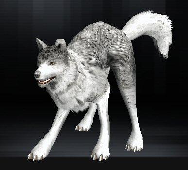 Wolf 01 1