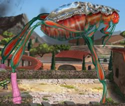 Giant flea