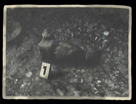 File:Crime Scene Photo -1.jpg