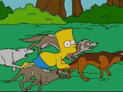 Bart in the Backyard