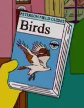 File:Birds.png