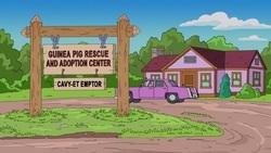 File:Guinea Pig Rescue And Adoption Center.jpg