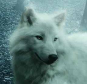 File:Wolf head (hook latch).jpg