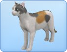 File:Breed15.png