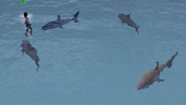 File:Shark on the surface.jpg