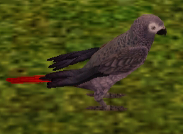 File:African Grey Parrot.png