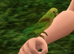File:Parakeet.png