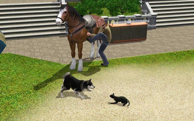 File:Pets In TS3.jpg