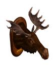 TS1 Moosehead