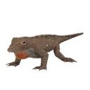 File:Anole Lizard.png
