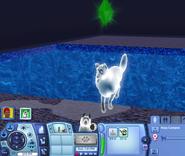 White ghostdog