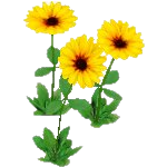 File:Wildflower Black Eyed Susan.png