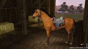 Horsepic1