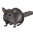 File:Chinchilla.png