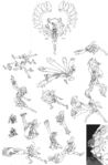 Venus-Fight-skullgirls-34436622-1262-1920