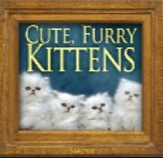 Cute Furry Kittens Single