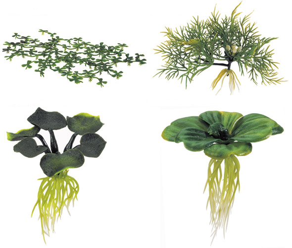 Types of water plants