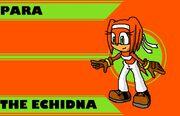 Para the Echidna