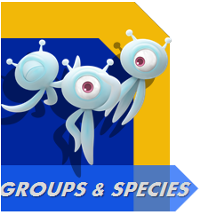 File:Groups and SpeciesButton.png