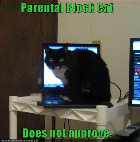 File:Lolcat-funny-picture-parental-block-cat.jpg