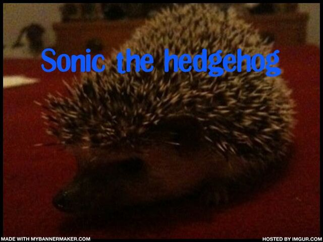 File:Sonic MY hedgehog.jpg