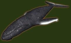 File:SU Whale Ornament.png