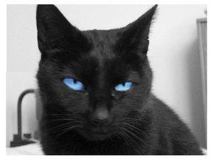 File:Blue eyes by Veaa.jpg