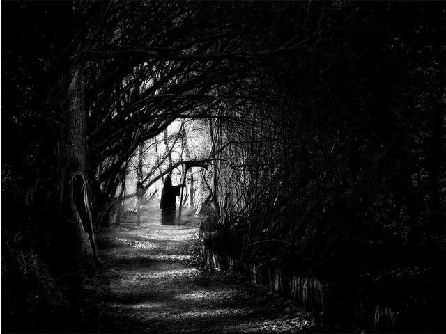 File:Dark-forest-night-image-31000.jpg