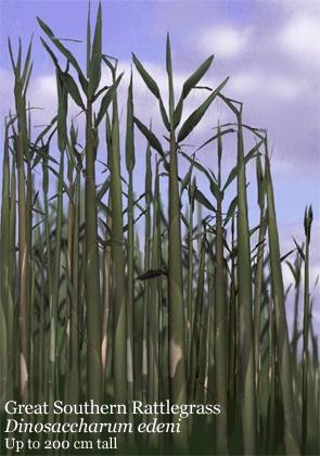 Rattlegrass