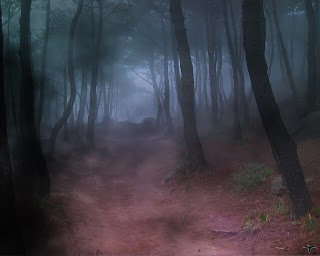 The Forest of Shadow