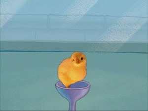 Roger the chick