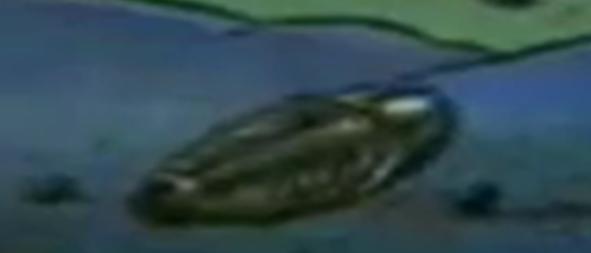 File:Trilobite.png
