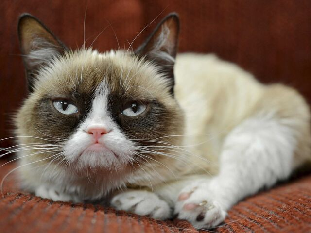 File:Grumpy-cat-has-earned-her-owner-nearly-100-million-in-just-2-years.jpg
