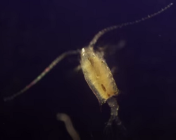 File:Mama Plankton.png