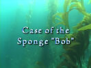 Case of The Sponge Bob