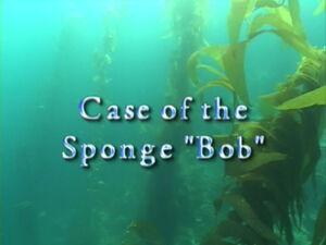 Case of The Sponge Bob