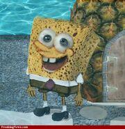The-Real-Spongebob--49993