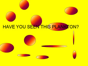 Have You Seen This Plankton