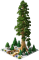 Decoration Hyperion Sequoia