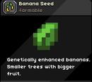 Banana Seed