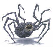 Talarian hook spider Decipher