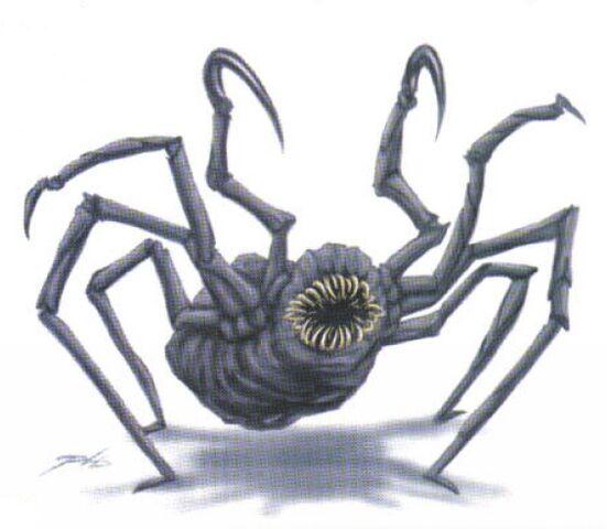 File:Talarian hook spider Decipher.jpg