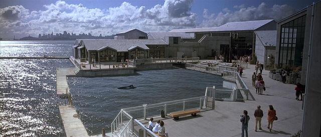File:Cetacean Institute.jpg