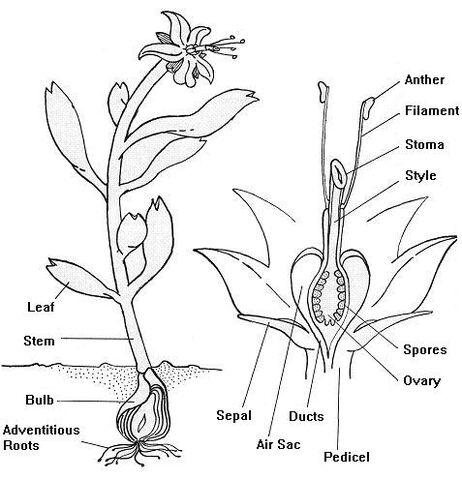 File:Omicron Ceti III Spore Plant.jpg