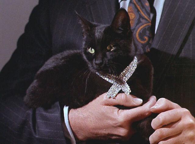 File:Isis-Cat.jpg