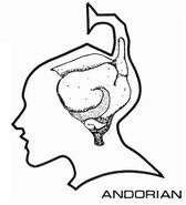 Andorian brain diagram