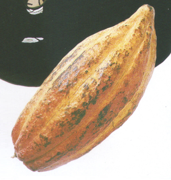 File:Hubba gourd.png