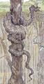 Dagobah python 2.png