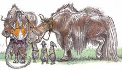 Pacithhip jerba breeder