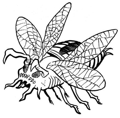 File:Piranha beetle.jpg